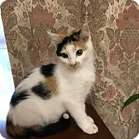 Adopt A Pet :: Kailar - Chippewa Falls, WI