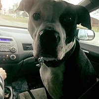 Adopt A Pet :: Farley - Centerburg, OH