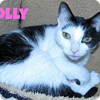Adopt A Pet :: Molly - Menomonie, WI