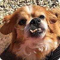 Adopt A Pet :: Fanta - Clayton, CA