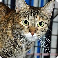 Adopt A Pet :: Marble-adoption pending - Fort Leavenworth, KS