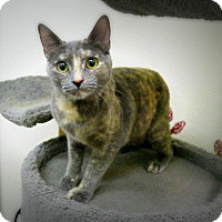 Adopt A Pet :: Tamsin - Casa Grande, AZ