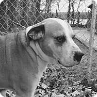 Adopt A Pet :: SHERBERT - Media, PA