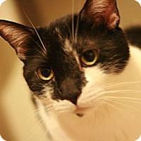 Adopt A Pet :: Bogart - Canoga Park, CA