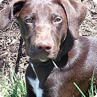 Adopt A Pet :: Myles - Lewisville, IN