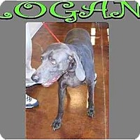 Adopt A Pet :: LOGAN - Las Vegas, NV