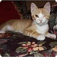 Adopt A Pet :: Calvin--PETSMART - Muncie, IN