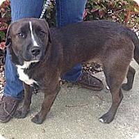 Adopt A Pet :: Sonny - Bardonia, NY