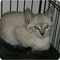Adopt A Pet :: Lexy - Brea, CA