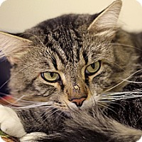 Adopt A Pet :: Boromir - Chicago, IL