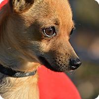 Adopt A Pet :: Buzz - Meridian, ID