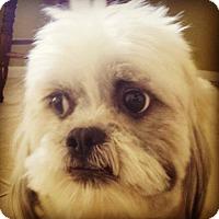 Adopt A Pet :: Bandit - Scottsdale, AZ