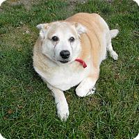 Adopt A Pet :: Care Bear - Elyria, OH