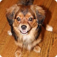 Adopt A Pet :: Riley - Atlanta, GA