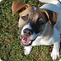 Adopt A Pet :: CALLIE - EDEN PRAIRIE, MN