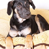 Adopt A Pet :: Jenell - Sudbury, MA