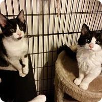 Adopt A Pet :: NJ - Suki and Luke - Blairstown, NJ