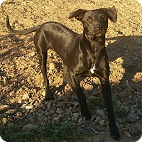 Adopt A Pet :: Shy - San Diego, CA