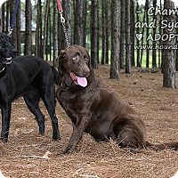 Adopt A Pet :: Sydney and Champagne - Minneola, FL