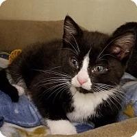 Adopt A Pet :: Elvis - Westbury, NY