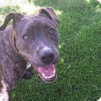 Adopt A Pet :: Larkin - Garden City, MI