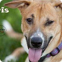 Adopt A Pet :: Iris - La Crosse, WI