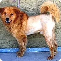 Adopt A Pet :: Tiberius - Gilbert, AZ