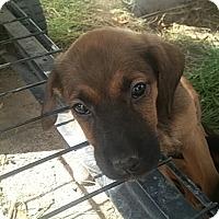 Adopt A Pet :: Sofie - Ogden, UT