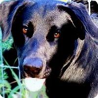 Adopt A Pet :: BERNIE(EASY GOING-SO LOVING!! - Wakefield, RI