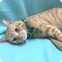 Adopt A Pet :: BUTTERSCOTCH - Lexington, NC