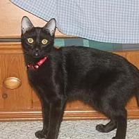Adopt A Pet :: Patience - Santa Fe, TX