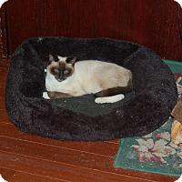 Adopt A Pet :: Garfunkel - Great Mills, MD