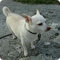 Adopt A Pet :: Butter - Deerfield Beach, FL