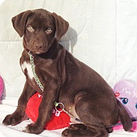 Adopt A Pet :: Waggs - West Chicago, IL