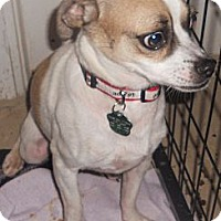 Adopt A Pet :: Pug/Beagle X - Aloha, OR