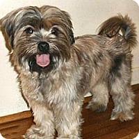 Adopt A Pet :: Justine - Mooy, AL