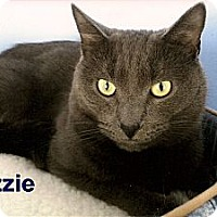 Adopt A Pet :: Ozzie - Medway, MA
