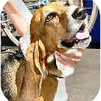 Adopt A Pet :: Babette - Phoenix, AZ