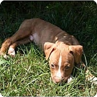 Adopt A Pet :: Dojo - Reisterstown, MD