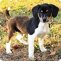 Adopt A Pet :: Baldwin - Staunton, VA