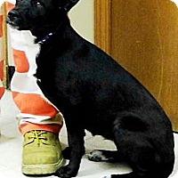 Adopt A Pet :: Maggie - Washington Court House, OH
