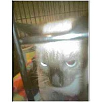Adopt A Pet :: Bambi - Owasso, OK