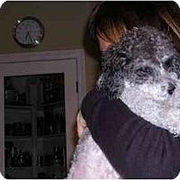 Adopt A Pet :: Samson - La Costa, CA