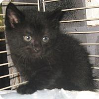 Adopt A Pet :: Blackberry - Dallas, TX
