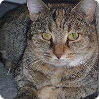 Adopt A Pet :: Brandie - Hamburg, NY