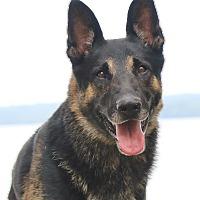 Adopt A Pet :: Wolfie - Nashville, TN