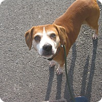 Adopt A Pet :: #504-14 ADOPTED! - Zanesville, OH