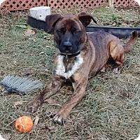 Adopt A Pet :: Shane - Hamilton, ON