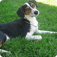 Adopt A Pet :: Fletcher - Schaumburg, IL
