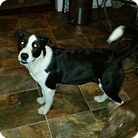 Adopt A Pet :: Will and Kate - Bardonia, NY
